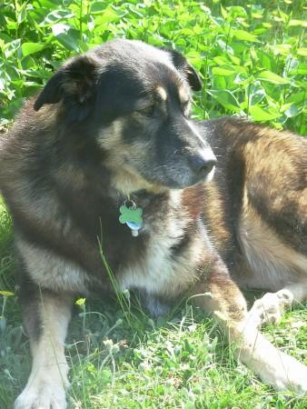 Leila/Laila/Layla 5441643
